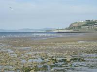 gulls on Colwyn Bay beach, June 2008